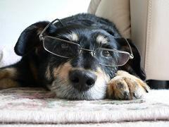 ネットワークビジネスと会社dog.jpg